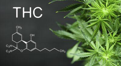 Wietolie Met THC
