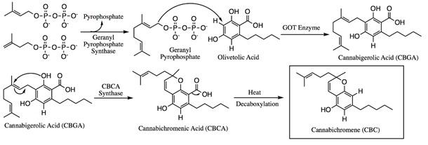 Biosyntheseproces van CBC olie