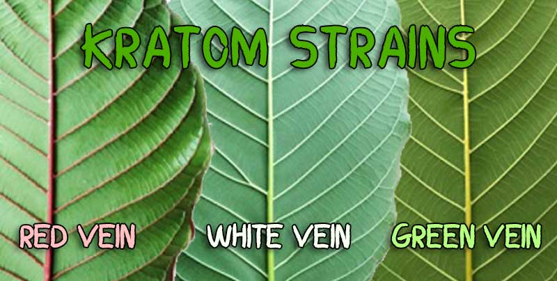 Kratom red vein white vein green vein