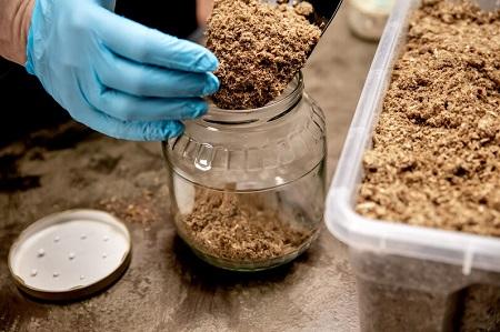 Teelt medicinale paddenstoelen